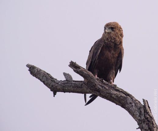 bird (4 of 8)