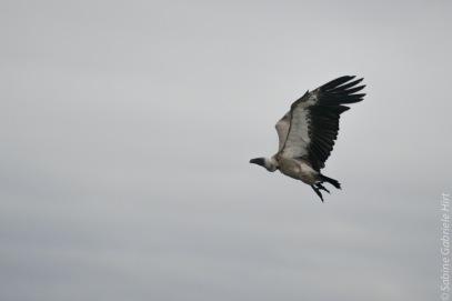 bird (6 of 8)