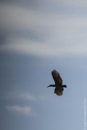 bird (7 of 8)