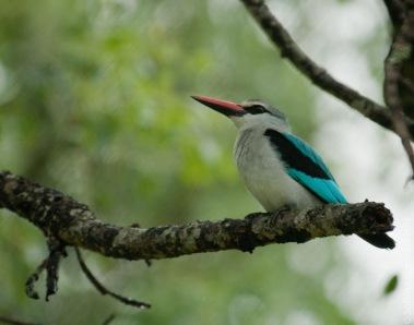 birds (1 of 51)