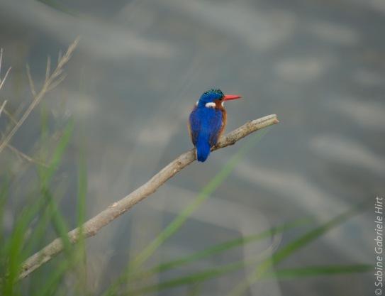 birds (12 of 51)