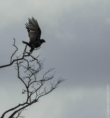 birds (13 of 51)