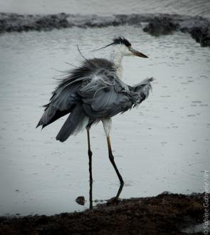 birds (15 of 51)