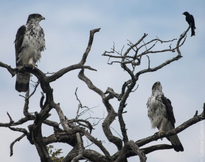 birds (18 of 51)