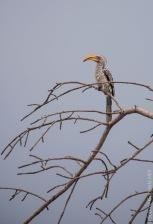 birds (19 of 51)