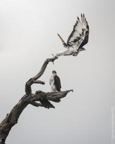 -> More Birds