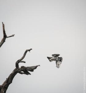 birds (21 of 51)