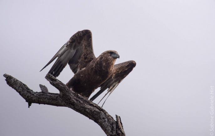 birds (23 of 51)
