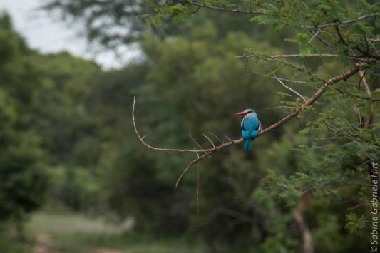 birds (24 of 51)