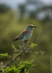 birds (31 of 51)