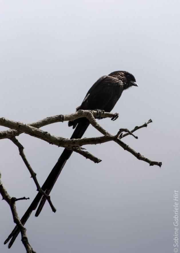 birds (33 of 51)