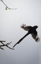 birds (34 of 51)
