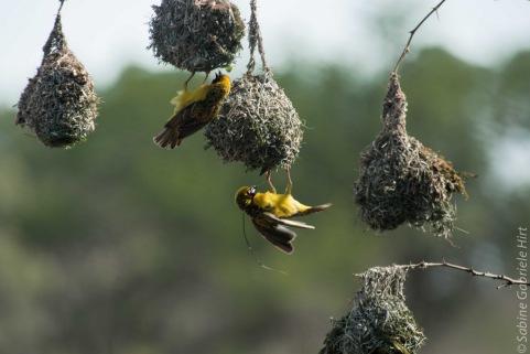 birds (36 of 51)