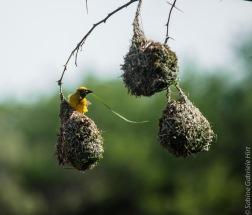 birds (37 of 51)