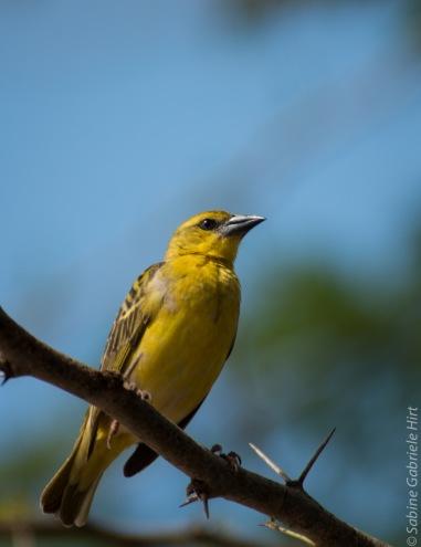 birds (39 of 51)