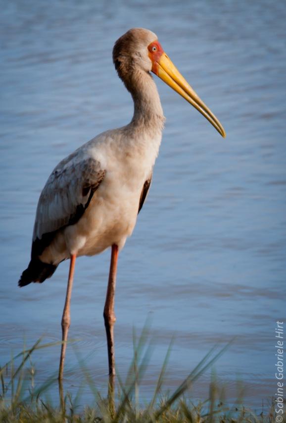 birds (4 of 51)
