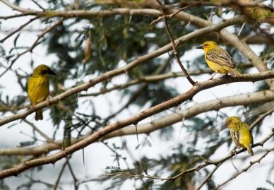 birds (40 of 51)
