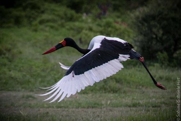 birds (42 of 51)