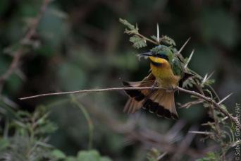 birds (44 of 51)