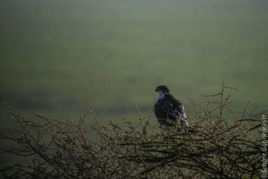 birds (45 of 51)