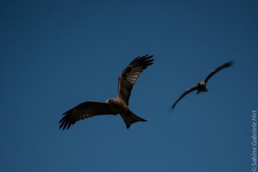 birds (46 of 51)