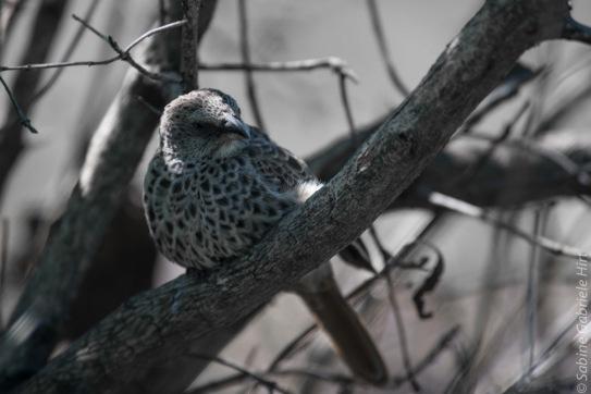 birds (47 of 51)