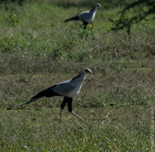 birds (50 of 51)