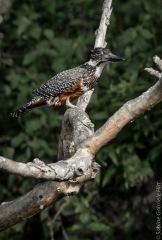 birds (7 of 51)
