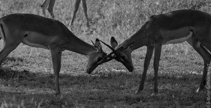 black and white (108 of 123)