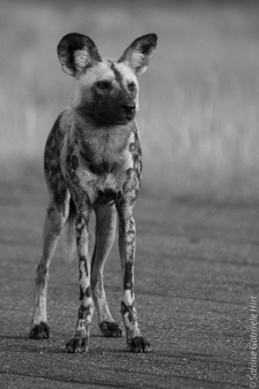 -> Wildlife Photography in Black & White (2009 - 2015) - Part 1