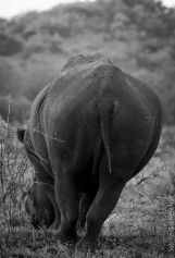 AFRICAN WILDLIFE IN BLACK AND WHITE (PART 1)