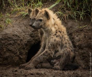 hyena (5 of 10)