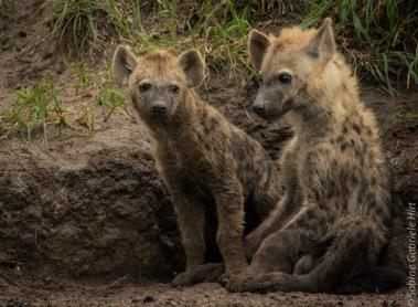 hyena (6 of 10)