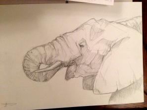 Bigger Elephant