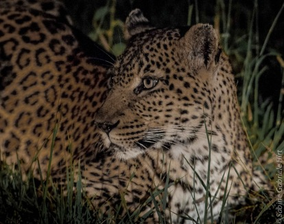 leopard (3 of 33)
