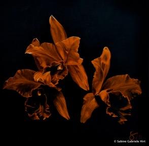 "ORANGE ORCHIDS, 2013 Acrylic on Canvas, 40x40"""