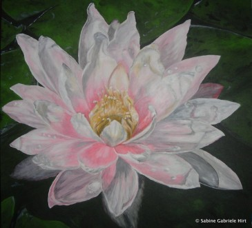 WATERLILY, 2005 Acrylic on Canvas, 36x36""