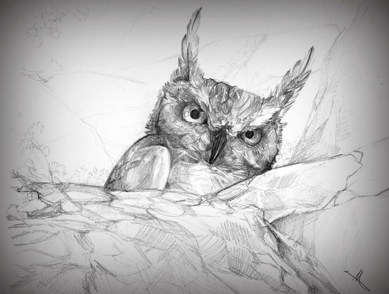 160508_Sossusvlei Owl.jpg