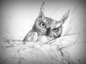 Sossusvlei Owl