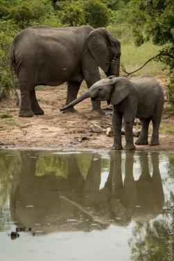 elephant (1 of 22)