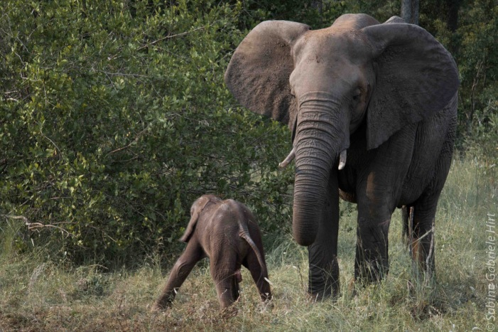 elephant (10 of 22)