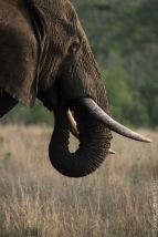 elephant (12 of 22)
