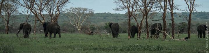 elephant (13 of 22)