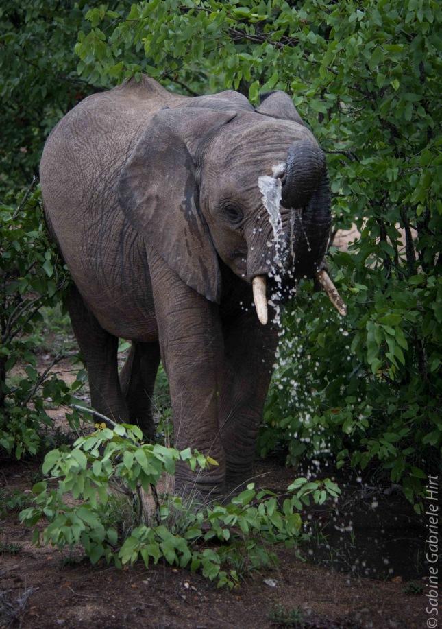 elephant (14 of 22)
