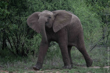 elephant (16 of 22)
