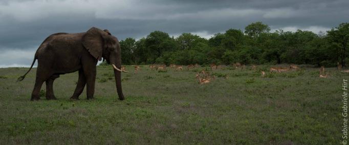 elephant (17 of 22)