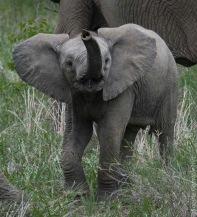 elephant (18 of 22)