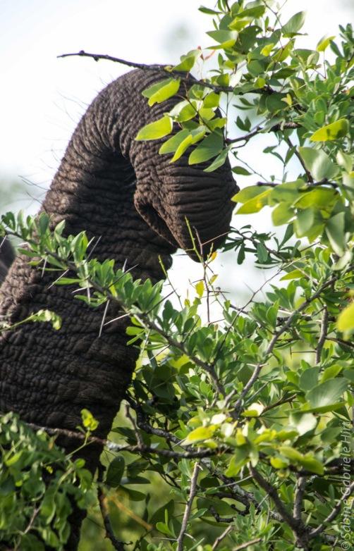 elephant (19 of 22)