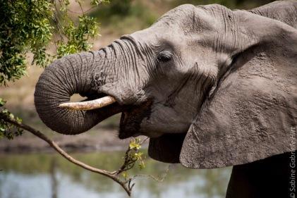 elephant (2 of 22)