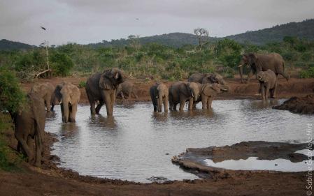 elephant (21 of 22)